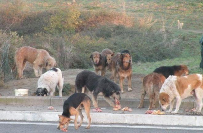 Anagrafe canina, convenzione tra Pachino, Portopalo e Asp per la prevenzione del randagismo