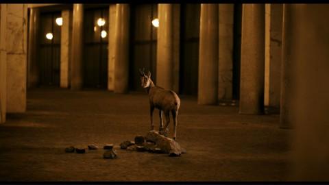 'Still Life' di Davide Gambino è tra i film selezionati al Documentary Campus di Berlino.