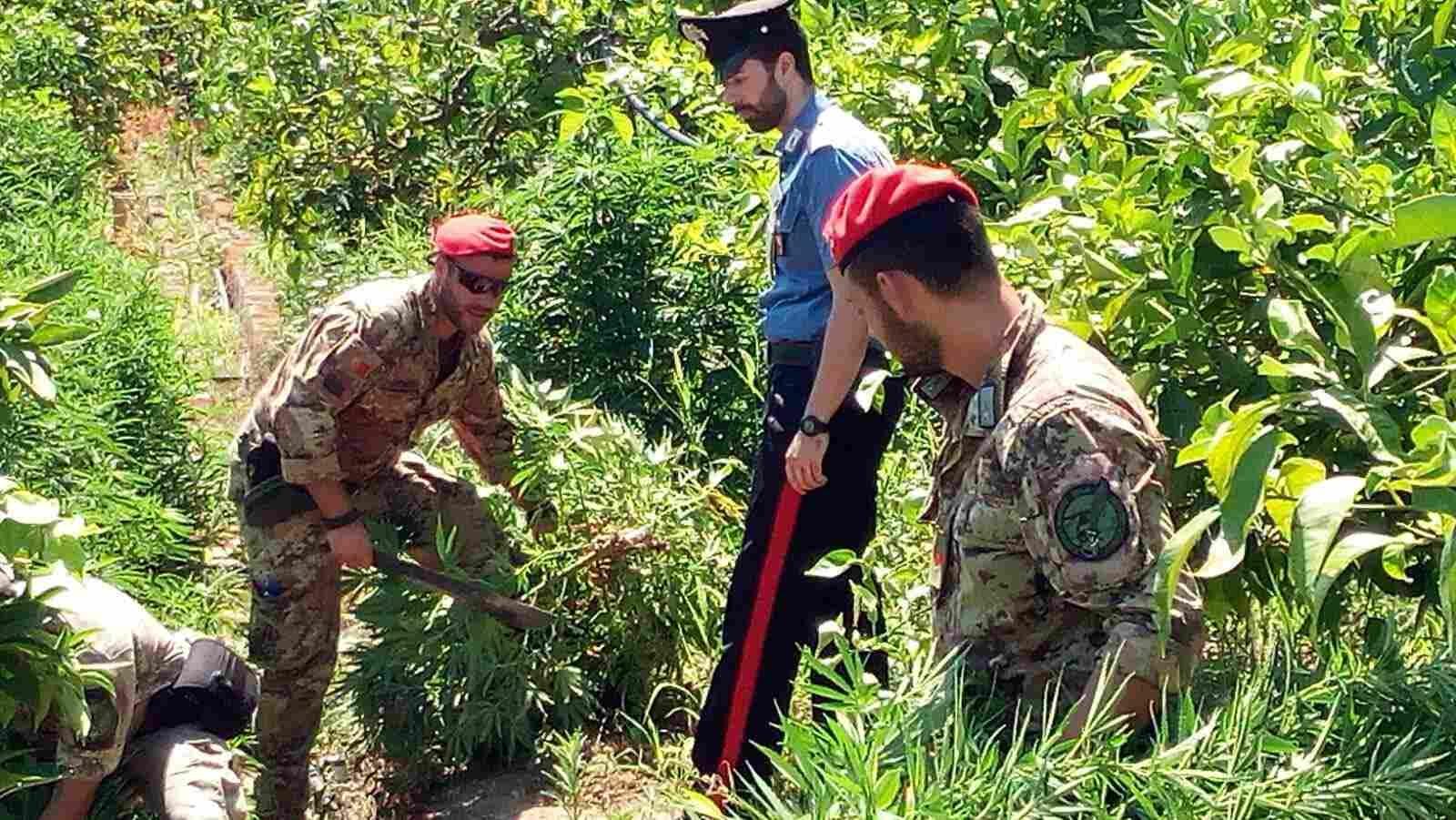 Francofonte, i carabinieri di Francofonte e lo squadrone cacciatori di Sicilia individuano piantagione di marijuana: due arresti