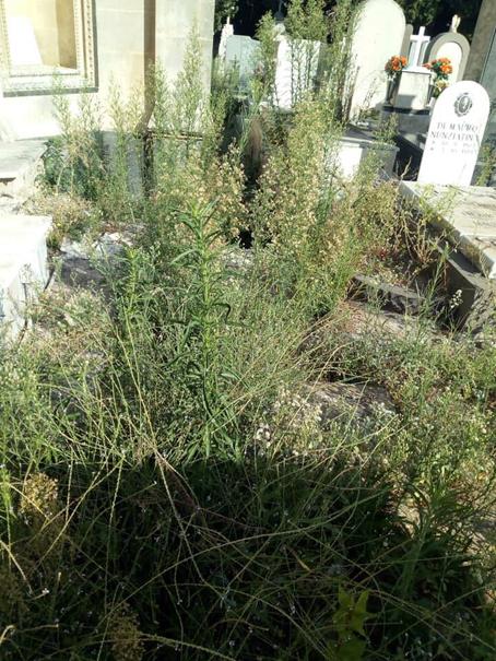 """Lentini, Erbacce sulle tombe e  tra i viali al cimitero. Scatta la protesta dei familiari dei defunti. il sindaco Saverio Bosco: """"abbiamo inviato una lettera di diffida alla ditta""""."""