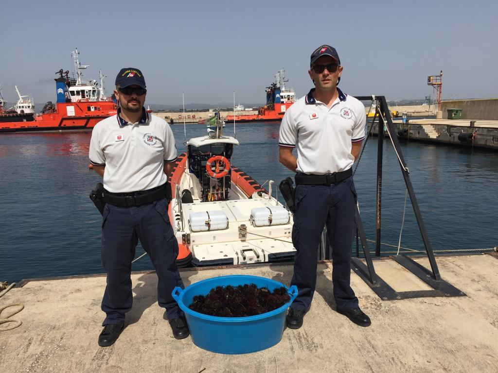 Augusta, sequestro di circa 200 ricci di mare, frutto di una battuta di pesca di frodo