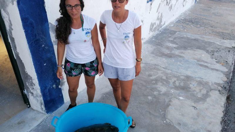 Linosa: tartaruga ingoia ami, salvata da diportisti ed affidata alle cure dell'Area Marina Protetta