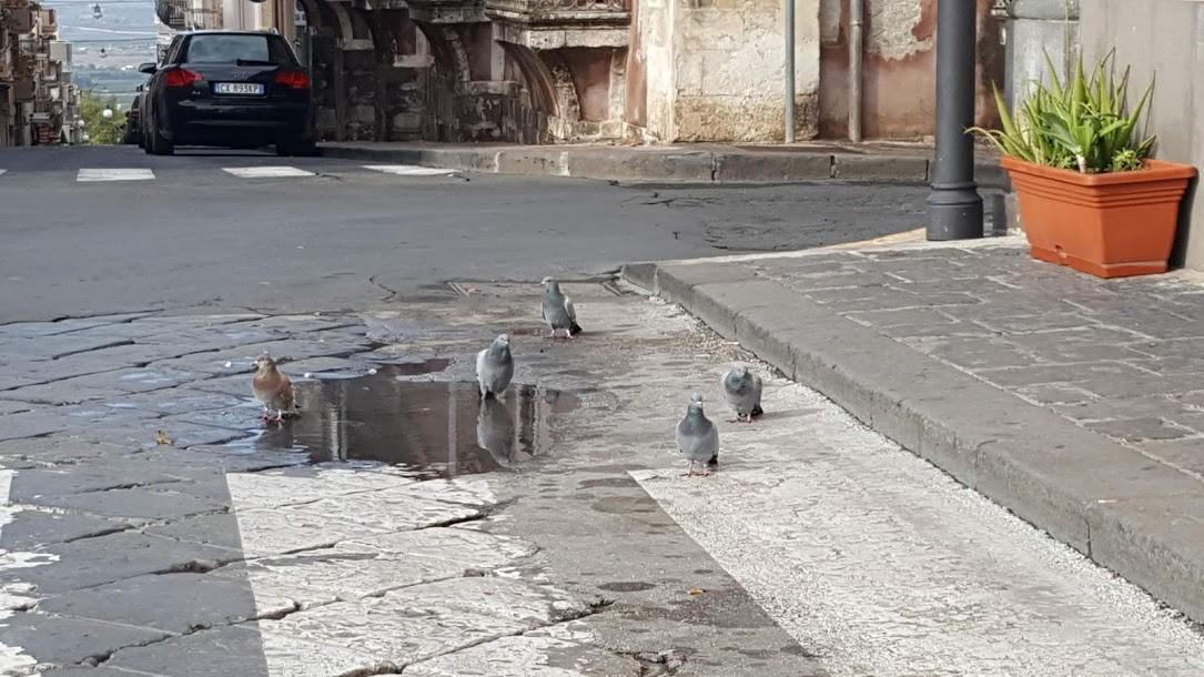 Carlentini, Coronavirus, le colombe nel semi lookdown si riprendono piazza Diaz