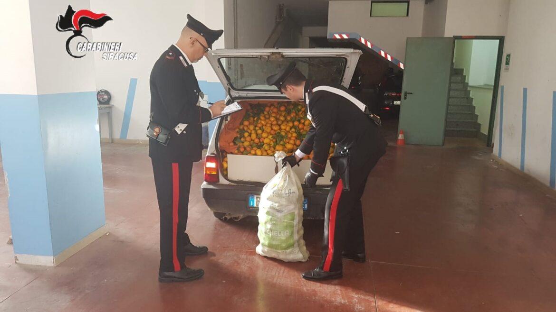 Lentini, i carabinieri arrestano un catanese per furto di arance