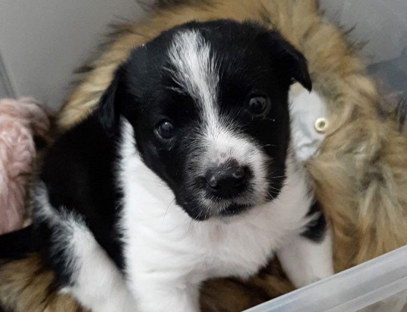 Francofonte. Cucciola abbandonata in piena campagna soccorsa e accudita da volontaria, la storia di Xena